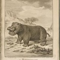 1700年代発刊のビュフォンの「The Natural History of the Hippopotamusor River horse」 1700年代発刊のビュフォンの「The Natural History of the Hippopotamusor River horse」