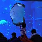 ジンベイザメとおとまり体験…海遊館の未就学児向けイベント 画像