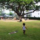 ハワイへの親子留学、母子で二人三脚の英語学習体験記 画像