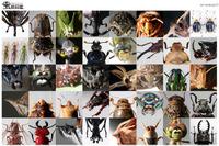 【夏休み】神戸新聞、身近な昆虫の特集サイト開設 画像
