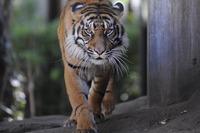 インドネシアの動物を学ぶモーニングZOO…上野動物園9/27 画像