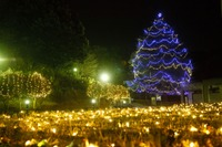 キャンパスにクリスマスの灯り…2015年大学イルミネーション情報 画像