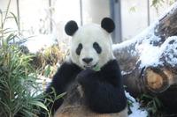 「ほっと」な魅力満載、冬の動物園・水族館…上野動物園など 画像