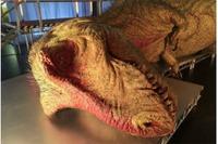 ナガシマスパーランドにナショジオ「恐竜大解剖」ティラノ標本