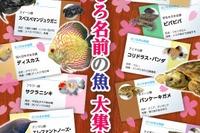 さいたま水族館に「おもしろ名前」の魚が大集合4/16-6/19