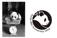 パンダの日の10/28、上野動物園でパンダ来日40周年記念イベント 画像