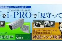 パナソニック、上野動物園のパンダをHD画質でライブ配信…一般公開中 画像