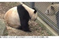 上野動物園のパンダ、3/19より展示再開