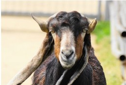 【シルバーウィーク2015】感謝祭など各種イベント、天王寺動物園
