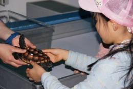鴨シー秋の特別イベント、ウミガメふれあい体験を実施