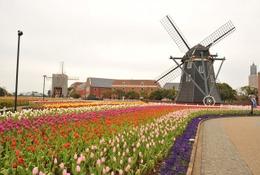 世界一流の花と庭が勢ぞろい、ハウステンボスにて10/3から 画像