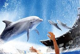 【夏休み2016】京都水族館でイルカとずぶぬれ水遊び7/23スタート