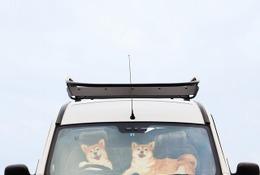 つぶらな瞳の柴犬が運転!? ユニークデザイン「ワンシェード」