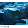 ホッキョクグマ舎 提供:天王寺動物公園事務所