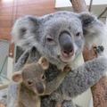 ドリーと赤ちゃん(10月20日撮影) (c) 埼玉県こども動物自然公園
