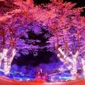 さがみ湖イルミリオン―夜桜イルミネーション