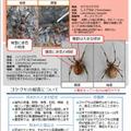 環境省のリーフレット「セアカゴケグモ・ハイイロゴケグモにご注意ください!」