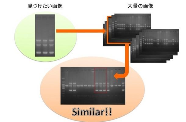 最近ではSTAP細胞などで一般にも学術論文画像の不正問題が社会問題として認知された。同社は東京大学出身の研究者が中心となって2014年に設立されたベンチャー企業で、研究用画像解析ソフトウェアの開発などを主な業務としている(画像はプレスリリースより)