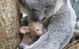 ジンベランと赤ちゃん (c) 埼玉県こども動物自然公園