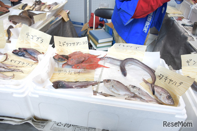 東京大学 柏キャンパス 一般公開2017/大気海洋研究所のようす…珍しい魚を毎年展示、質問をする子どもたちに教授らが丁寧に解説してくれる
