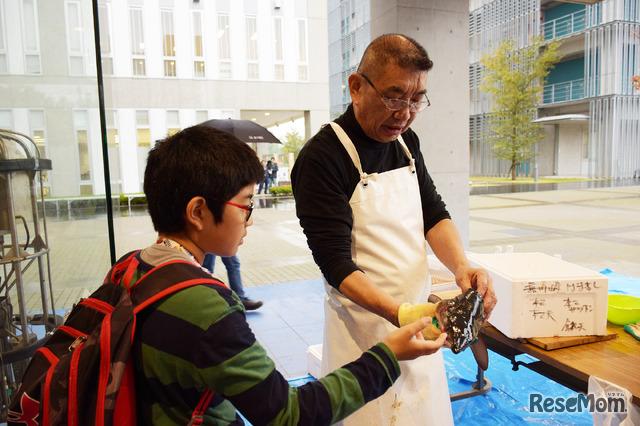 東京大学 柏キャンパス 一般公開2017/大気海洋研究所に隣接されているお寿司屋さん「お魚倶楽部 はま」の前では珍しい魚が多数展示され、マスターによるニタリザメの解体ショーも行われた