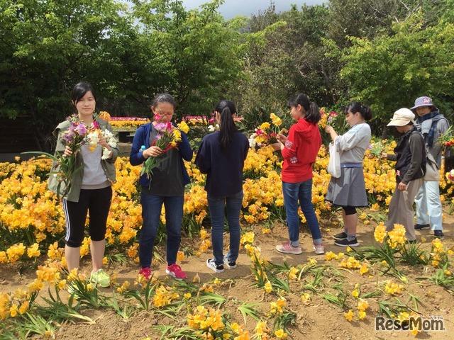 八形山(フリージア祭り開催中、八丈高生とともに花を摘む)