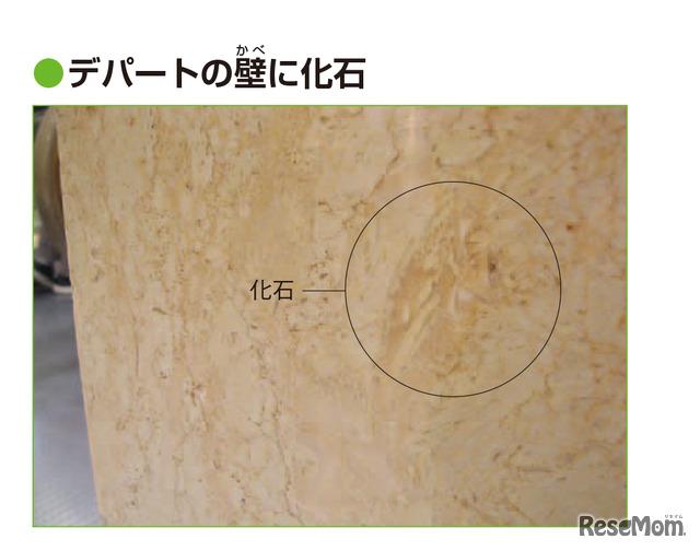 実験2 デパートの壁に化石