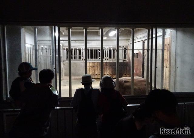 多摩動物公園サマーナイト キーパーズトーク