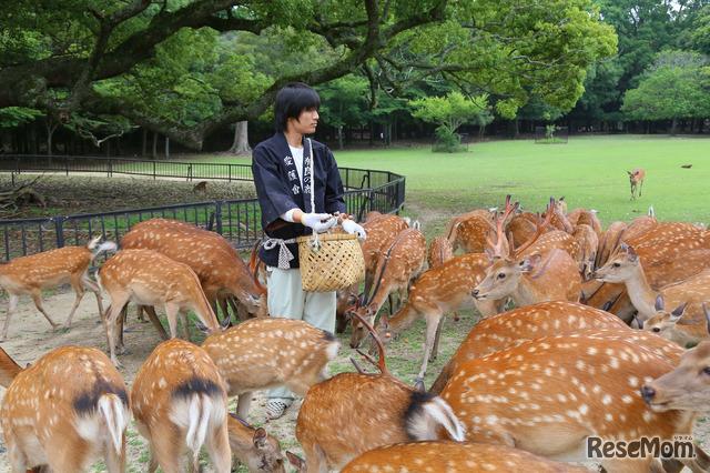 奈良公園「鹿寄せ」で鹿と触れ合い