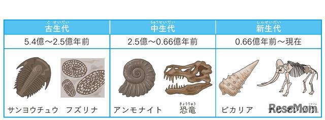 「示準化石」
